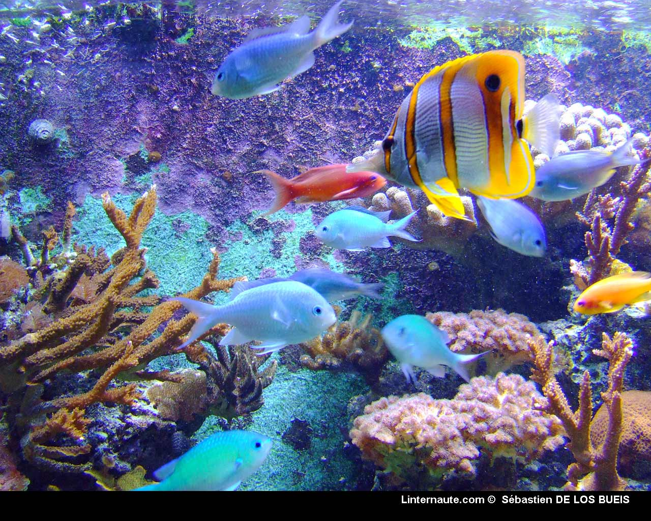 Desktop background fond d 39 cran anim et sonore gratuit for Fond ecran gratuit aquarium